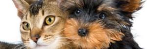 traslochi roma animali domestici